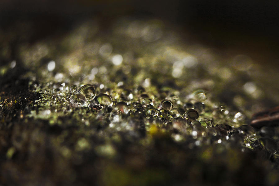 Macro Photograph - Dew 9202 by Damon Clarke