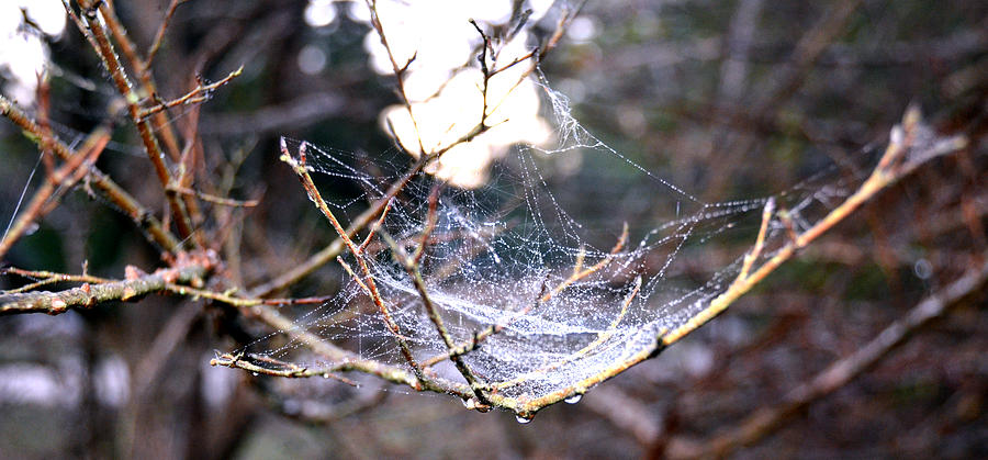 Web Photograph - Dew Covered Spiderweb by Julie Cameron
