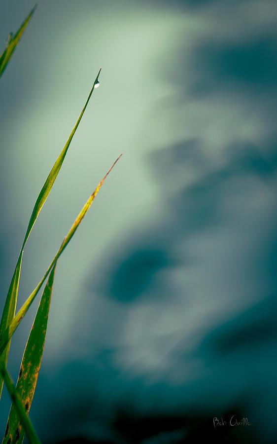Grass Photograph - Dew Drop by Bob Orsillo