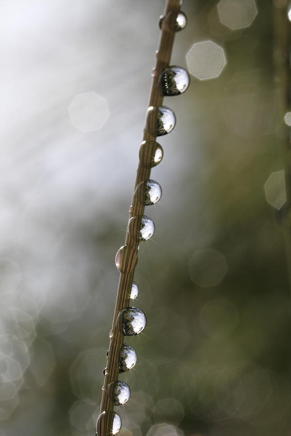 Abstract Photograph - Dew Drops Clinging To A Grass Culm by Ulrich Kunst And Bettina Scheidulin