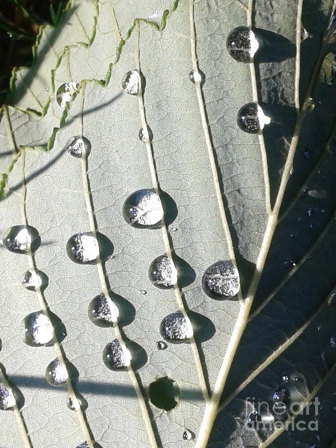 Dew Drops Photograph - Dew Drops by Ekta Gupta