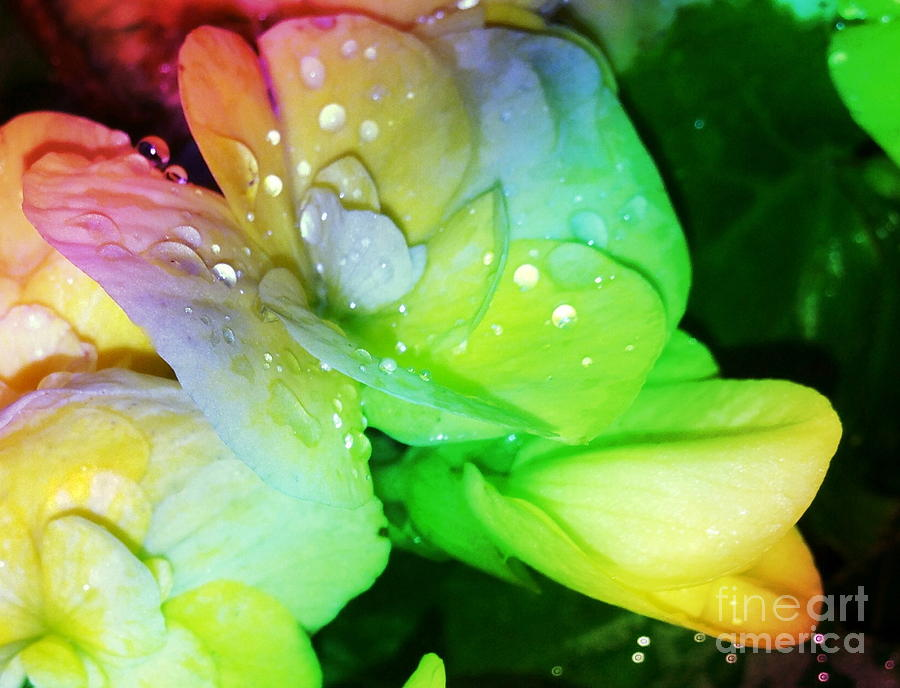 Dew Kissed Flower by Michelle Stradford