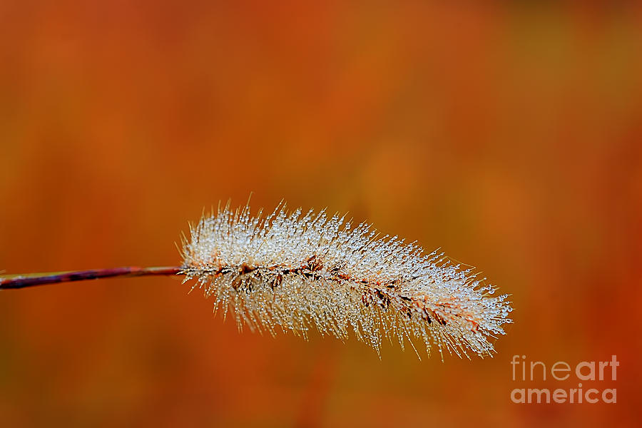 Dew Photograph - Dew On Grass Blade In Morning by Dan Friend