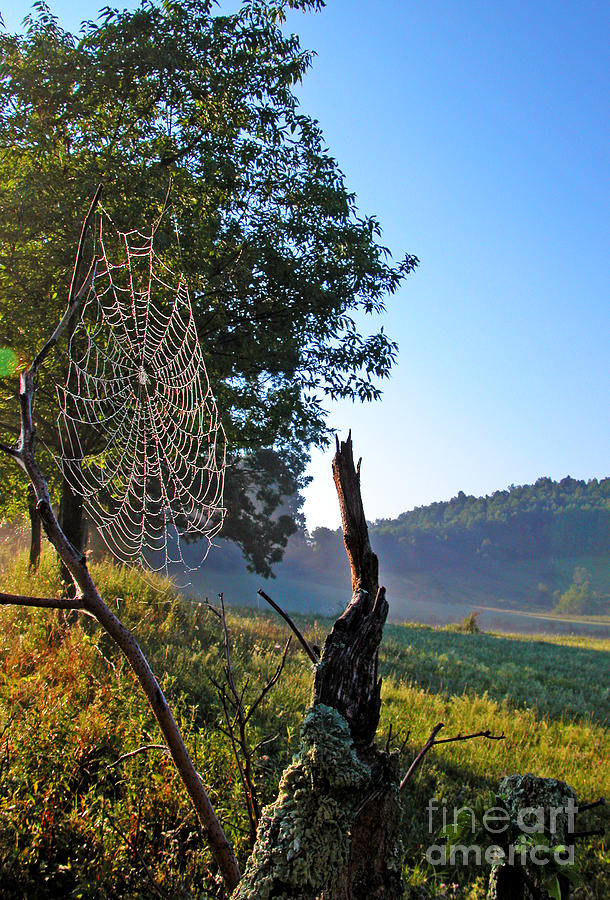 West Virginia Photograph - Dew On Spider Web by Thomas R Fletcher