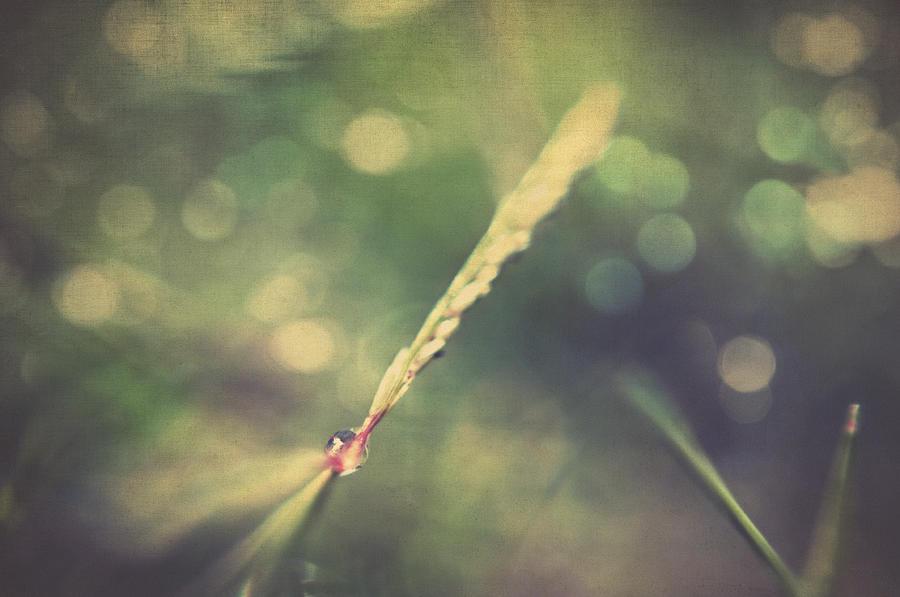 Macro Photograph - Dew by Taylan Apukovska