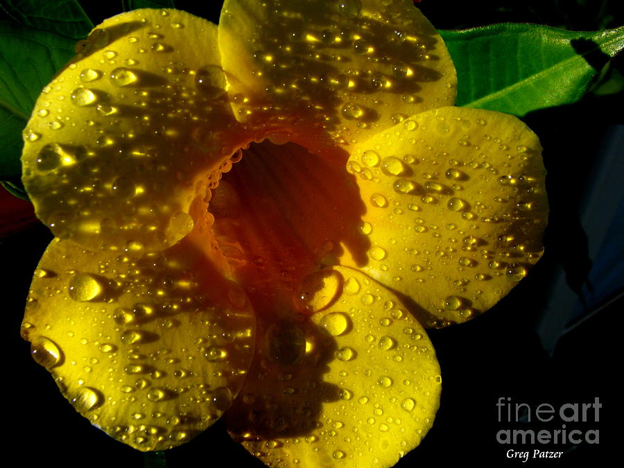 Patzer Photograph - Dew Trumpet by Greg Patzer