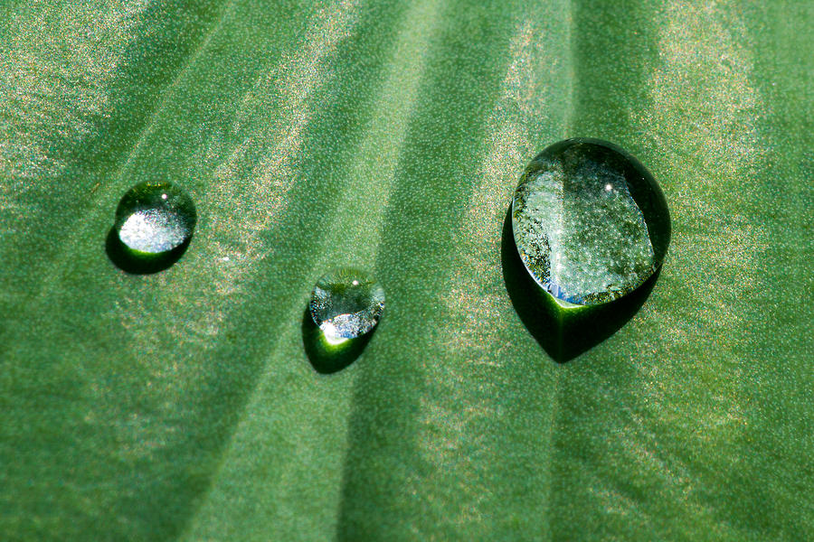 Agriculture Photograph - Diamonds Are Forever - Featured 3 by Alexander Senin