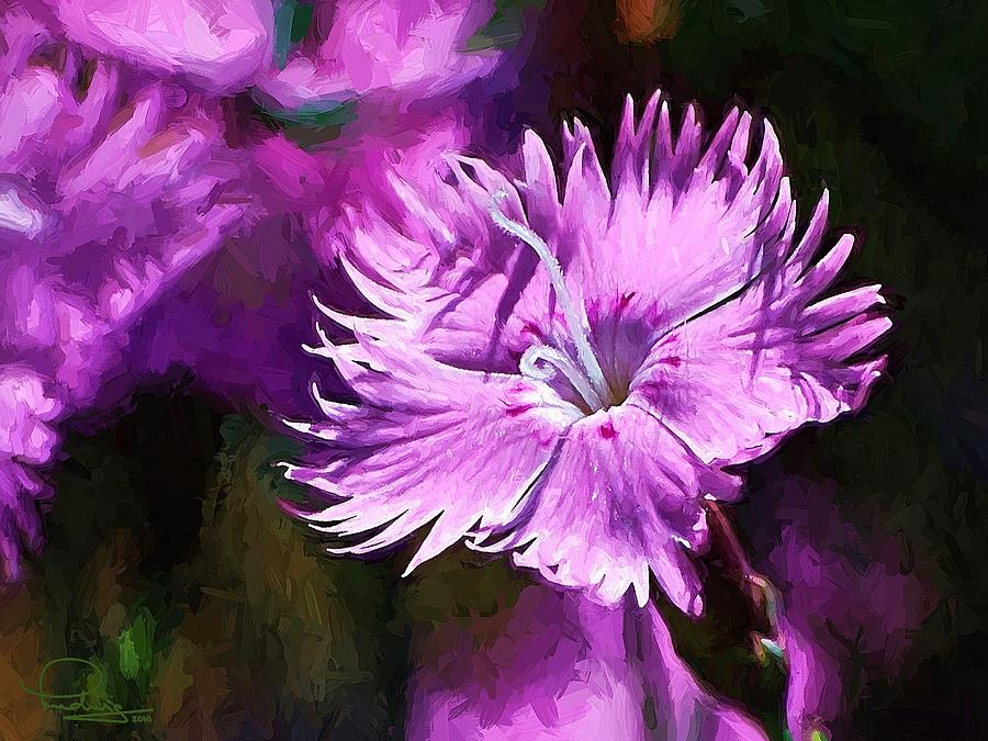 Dianthus by Ludwig Keck