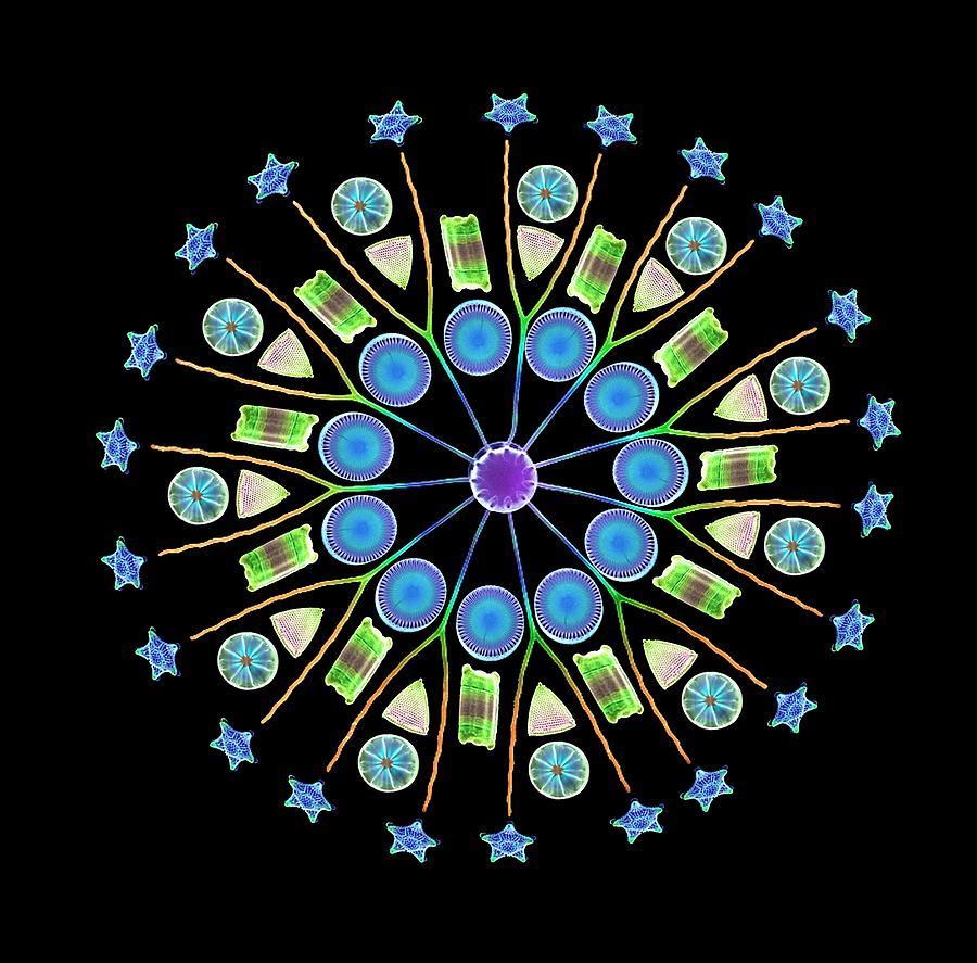 Diatom Photograph - Diatom Assortment by Steve Gschmeissner