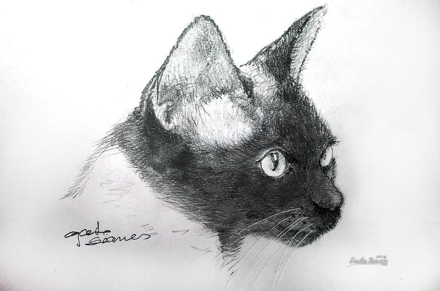 Dibujo Gato Siames Drawing By Emilio Romero B