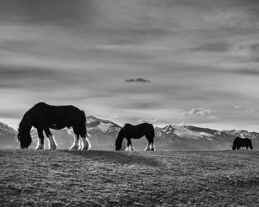 Horses Photograph - Dicks Horses by Dianne Arrigoni