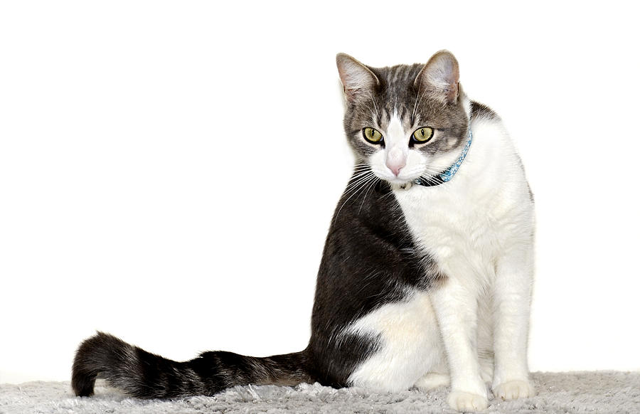 Cat Photograph - Did I Hear A Mouse by Susan Leggett