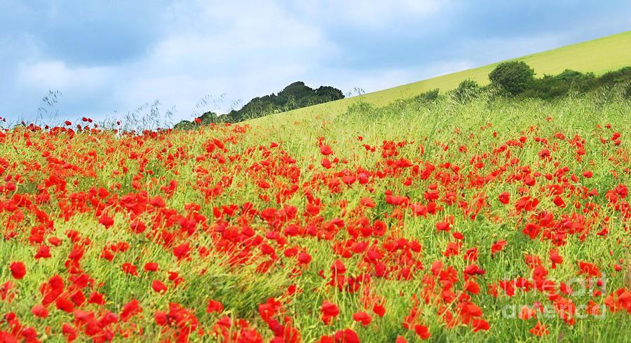 Poppy Photograph - Digital Art Field Of Poppies by Natalie Kinnear