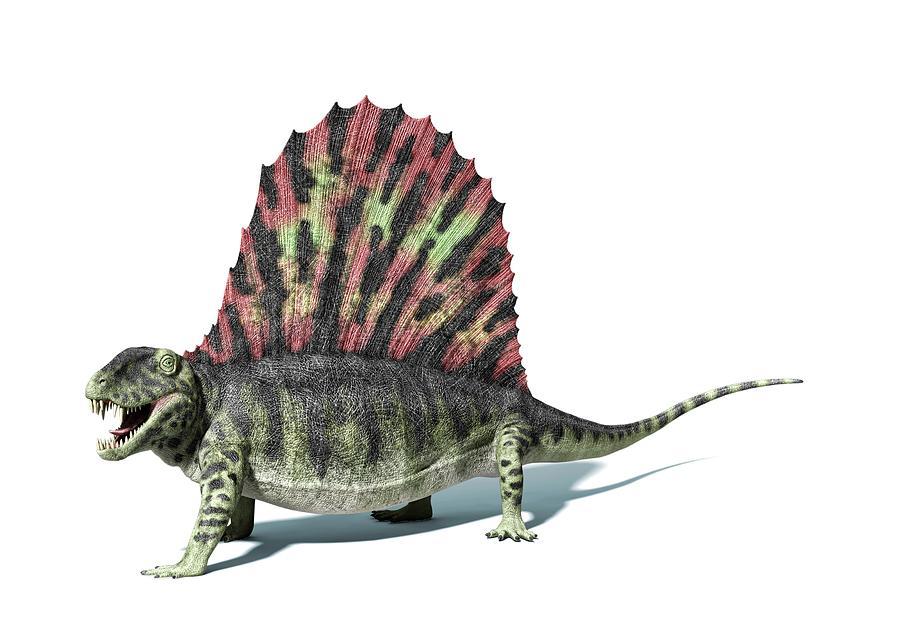 Dimetrodon, Artwork Digital Art by Leonello Calvetti
