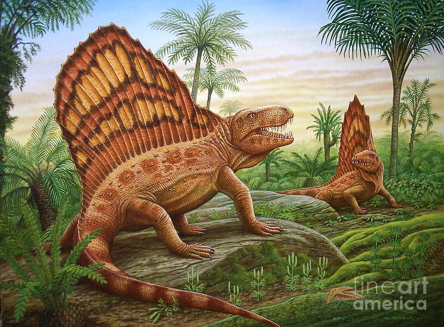 Dimetrodon Painting - Dimetrodon by Phil Wilson
