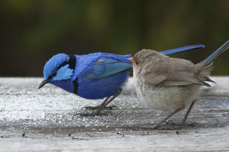 Wrens Photograph - Dining At Adrians by Robert Caddy