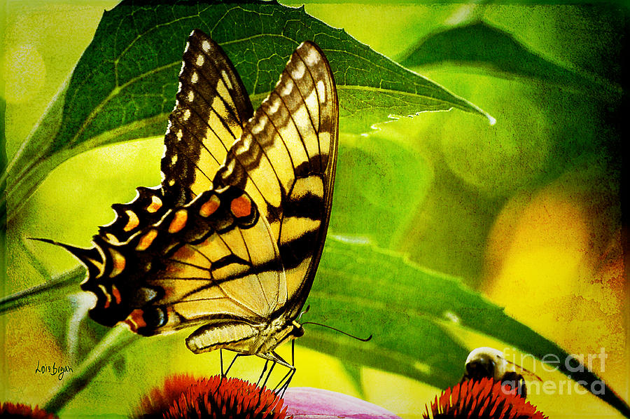 Butterfly Photograph - Dining With A Friend by Lois Bryan