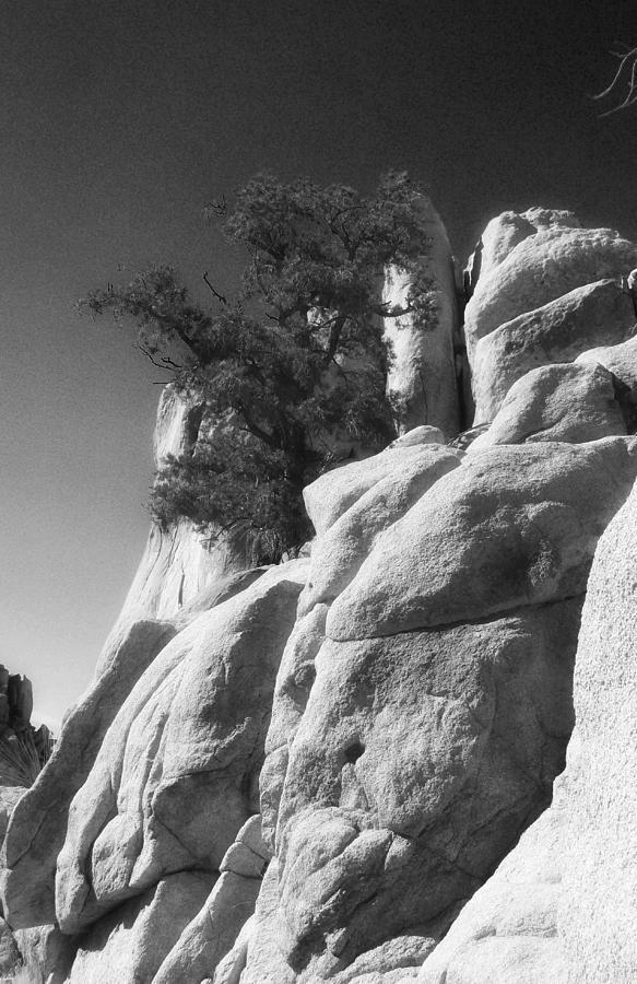Joshua Tree National Park Photograph - Dino Turns Away From Temptation by Carolina Liechtenstein