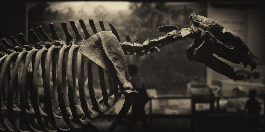 Paleontology Photograph - Dinosaur Bones 2 by Joseph Hedaya