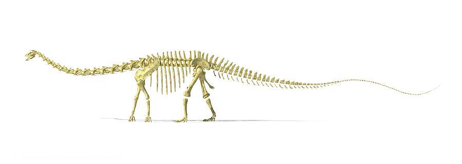 Diplodocus Dinosaur Skeleton, Artwork Digital Art by Leonello Calvetti