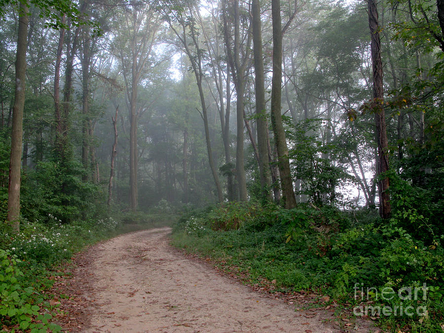 Path Photograph - Dirt Path In Forest Woods With Mist by Olivier Le Queinec