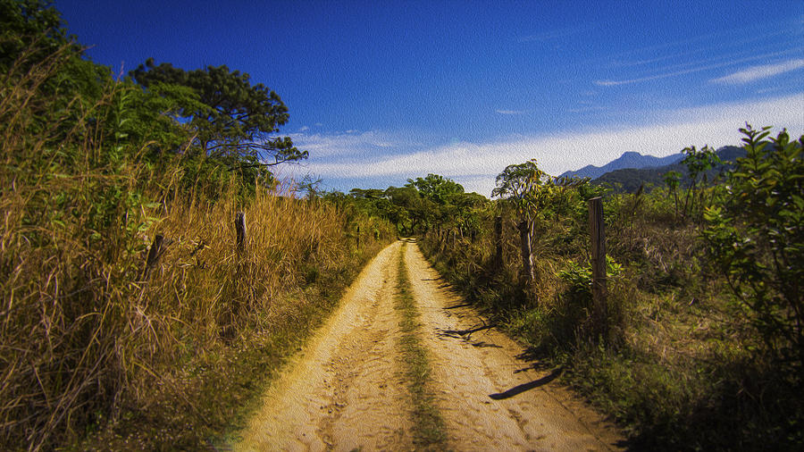 Jungle Photograph - Dirt Road by Aged Pixel