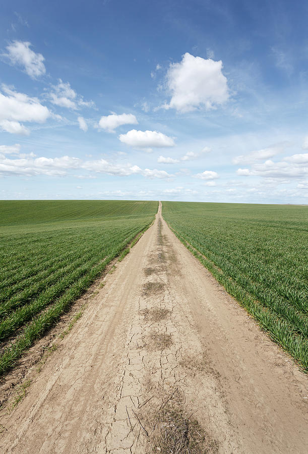 Dirt Road And Farmland Photograph by Adrian Studer