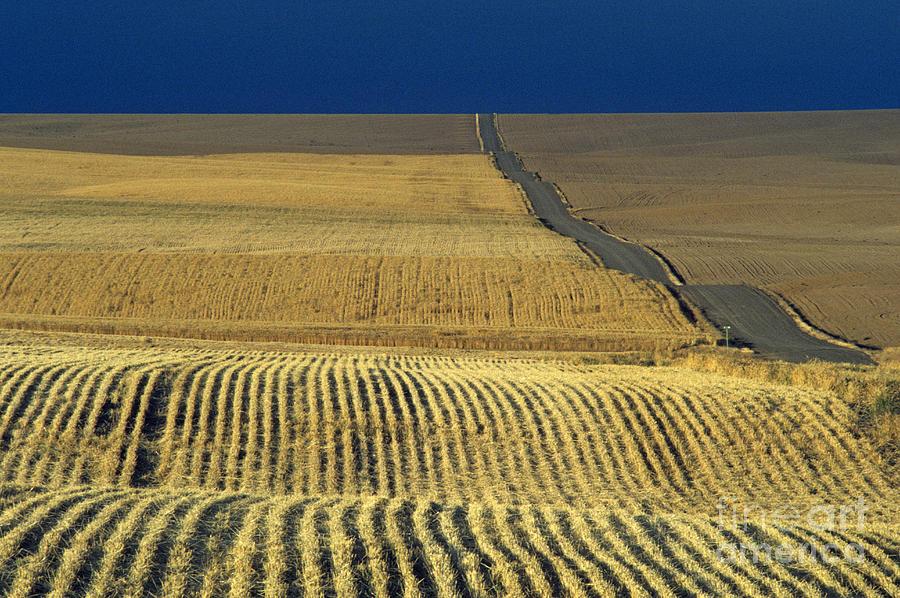 Dirt Road Going Through Cut Wheat Fields Photograph