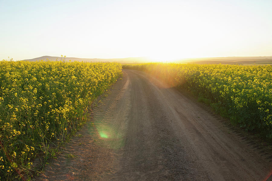 Dirt Road In Field Of Flowers Photograph by Luka