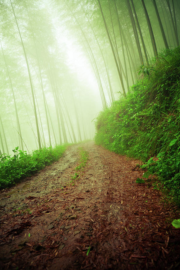 Dirt Road Leading Through Foggy Forest Photograph by Fzant