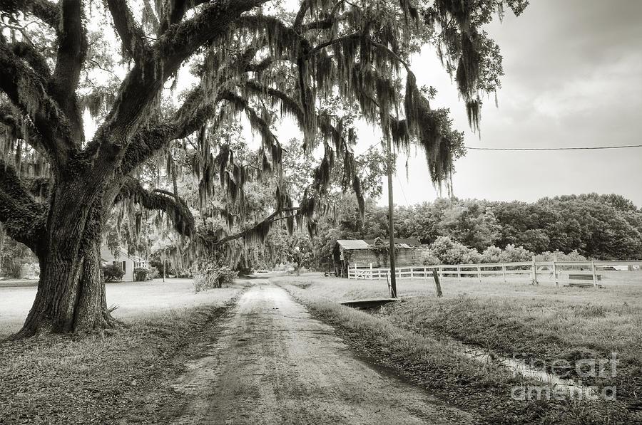 Live Oak Photograph - Dirt Road On Coosaw Plantation by Scott Hansen