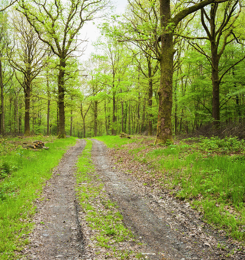 Dirt Road Surrounded By Trees In Photograph by Mike Kemp Images