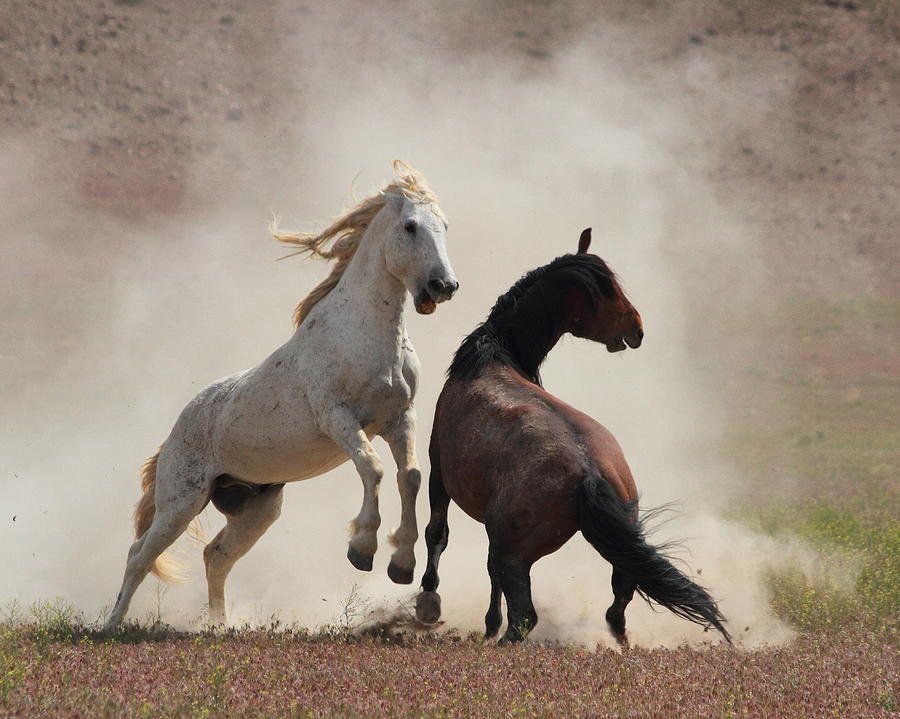 Horse Photograph - Dirty Business by Gene Praag