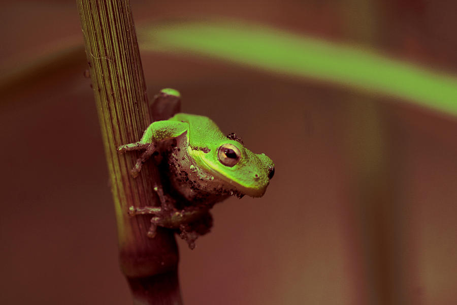 Squirrel Treefrog Photograph - Dirty Work by Sean Green