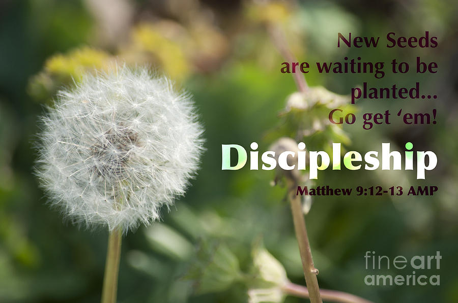 Dandelion Photograph - Discipleship by Affini Woodley