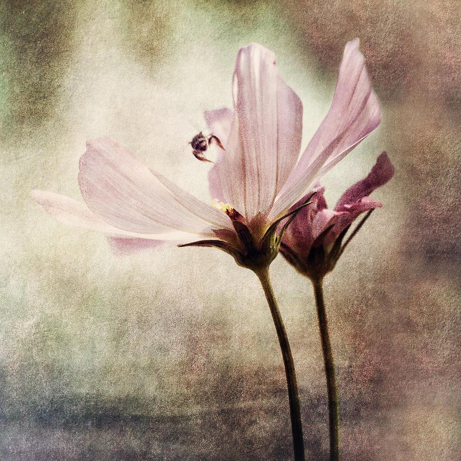 Flower Photograph - Discovery by Darlene Kwiatkowski