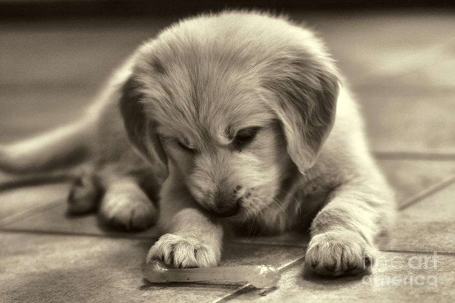 Puppy Photograph - Discovery by Jayne Carney