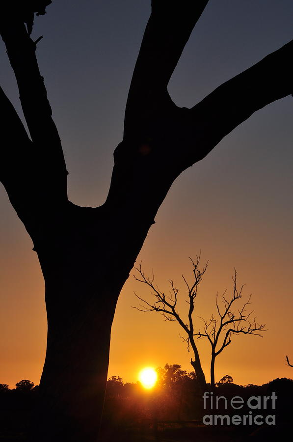 Sun Photograph - Distance Sunlit Oracle Card by Coralie Plozza