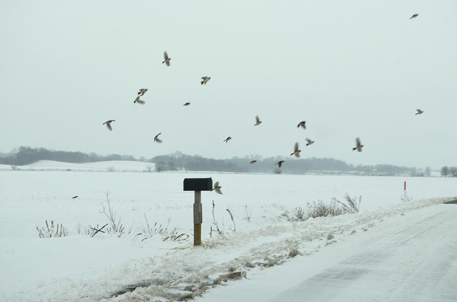 Winter Photograph - Disturbing The Winter Foragers by Julie Dant
