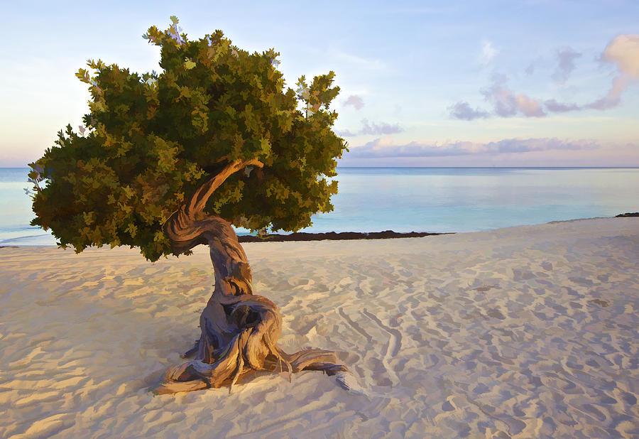 Seascape Photograph - Divi Divi Tree Of Aruba by David Letts