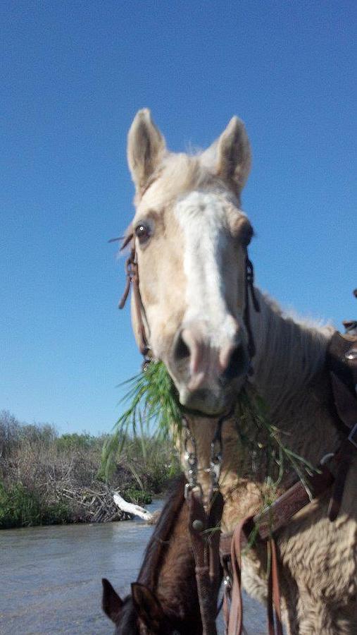Dixie Eats Grass Photograph