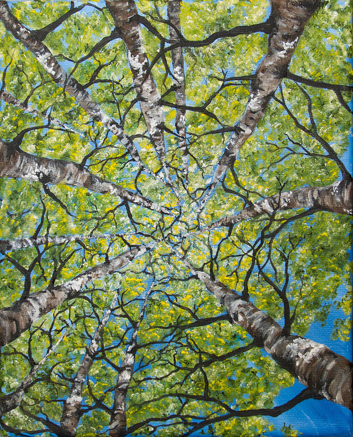 Dizzy Aspens by Melinda Cummings