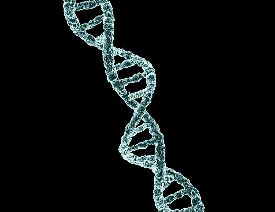 DNA Photograph by Cdascher