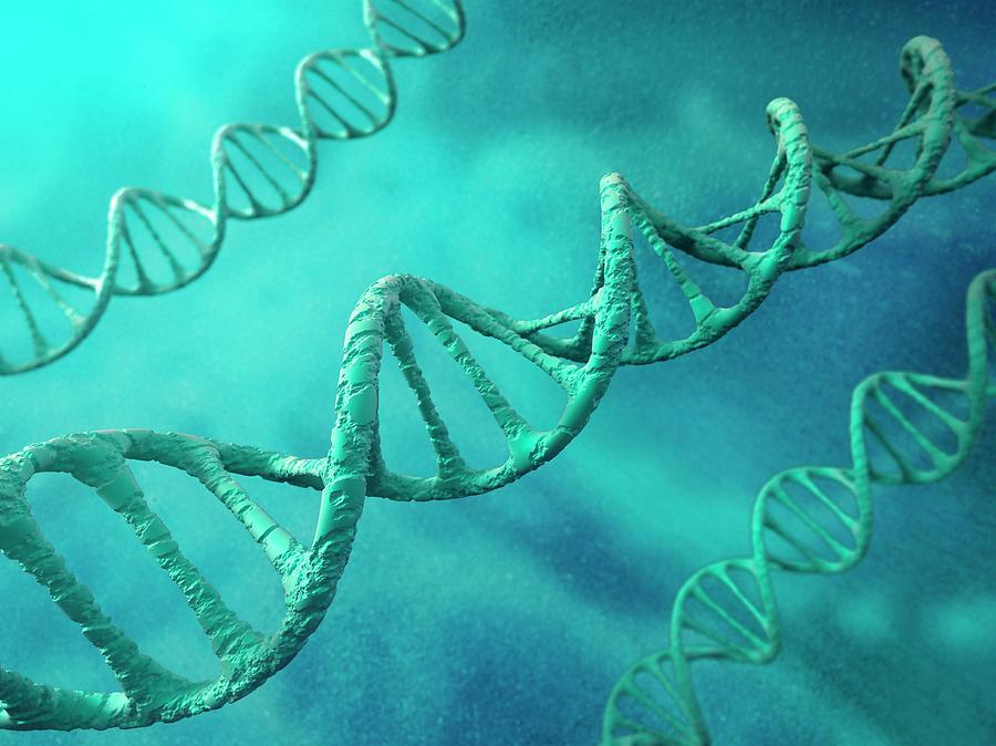 Dna Molecules, Artwork Digital Art by Science Photo Library - Andrzej Wojcicki