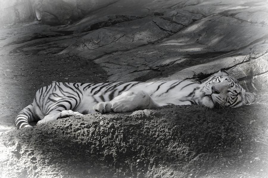 Sleeping Photograph - Do Not Disturb by Joan Carroll