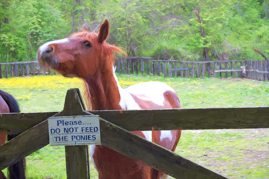 Horse Photograph - Do Not Feed by Alice Gipson