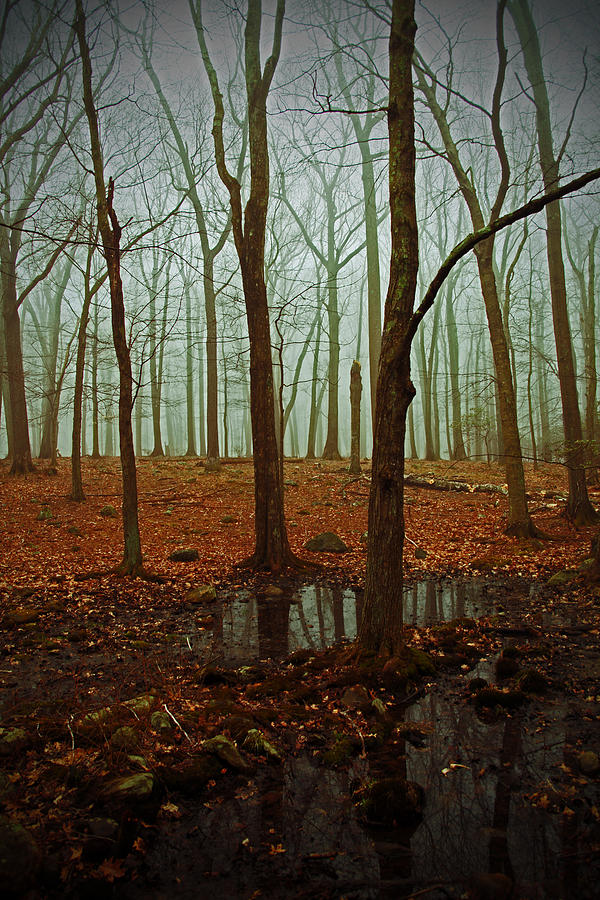 Woods Photograph - Do We Dare Go Into The Woods by Karol Livote