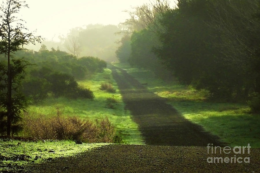 Path Photograph - Do We Ever Really Know What Lies Ahead by Ellen Cotton