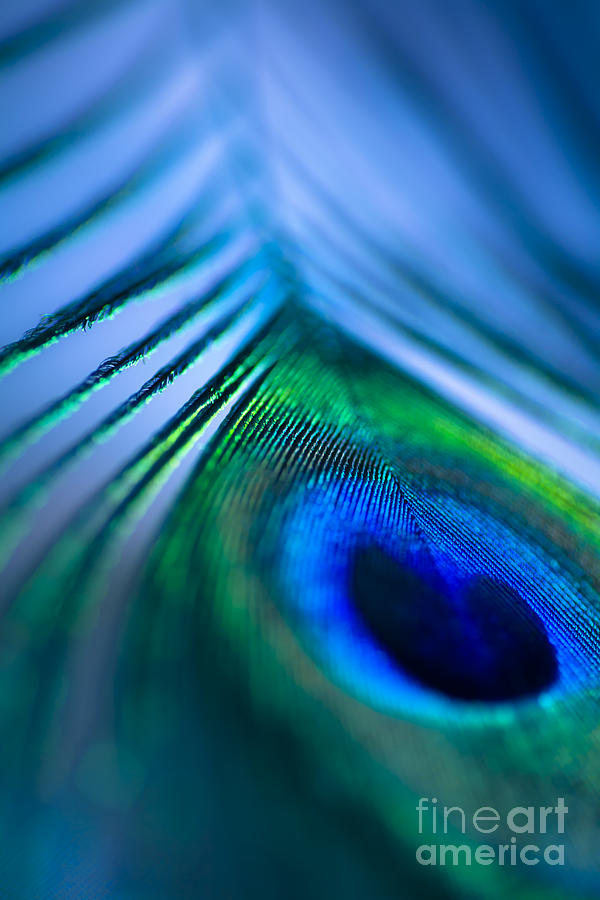 Blue Photograph - Do You Dream In Colour? by Jan Bickerton