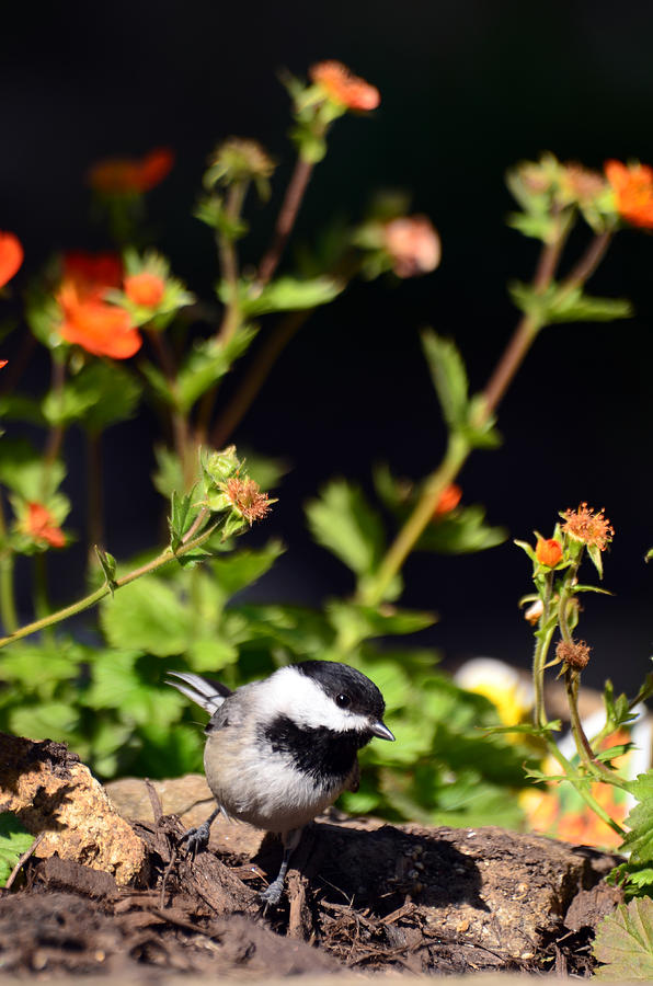 Bird Photograph - Do You Have Any Flowers That Lived by Lori Tambakis